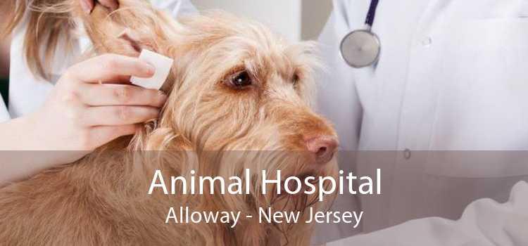Animal Hospital Alloway - New Jersey