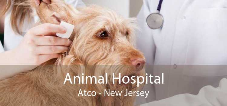 Animal Hospital Atco - New Jersey