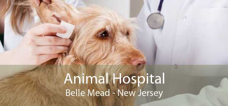 Animal Hospital Belle Mead - New Jersey