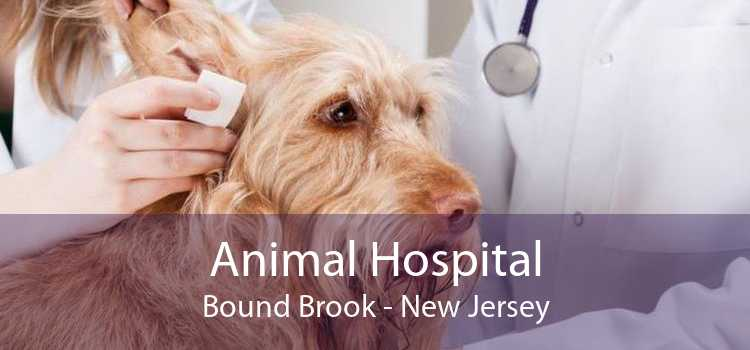 Animal Hospital Bound Brook - New Jersey