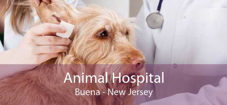 Animal Hospital Buena - New Jersey