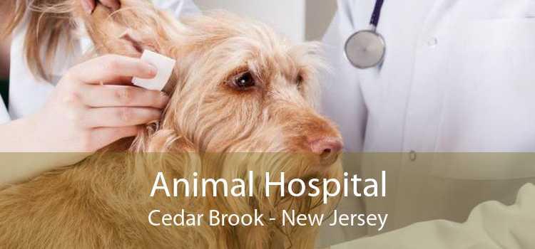Animal Hospital Cedar Brook - New Jersey