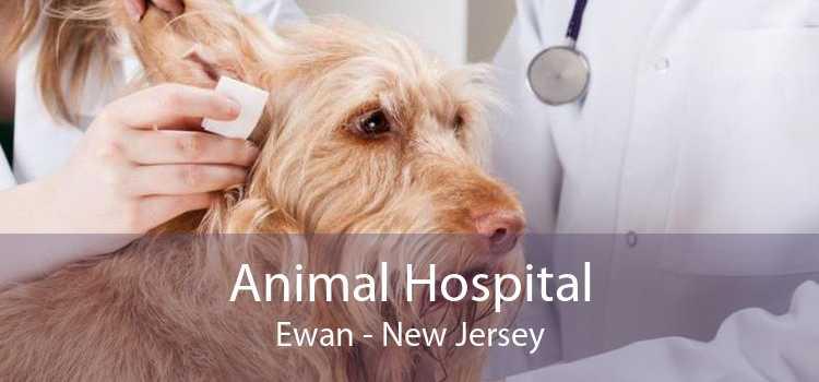 Animal Hospital Ewan - New Jersey