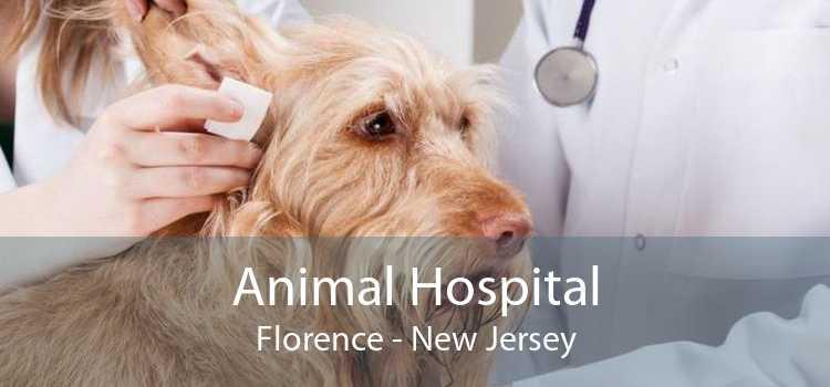 Animal Hospital Florence - New Jersey
