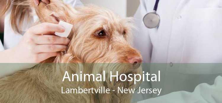 Animal Hospital Lambertville - New Jersey