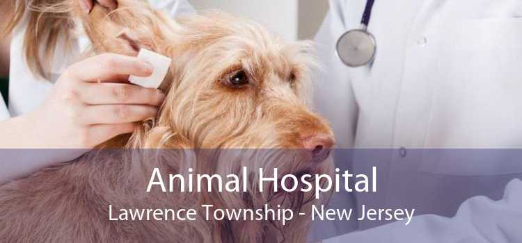 Animal Hospital Lawrence Township - New Jersey
