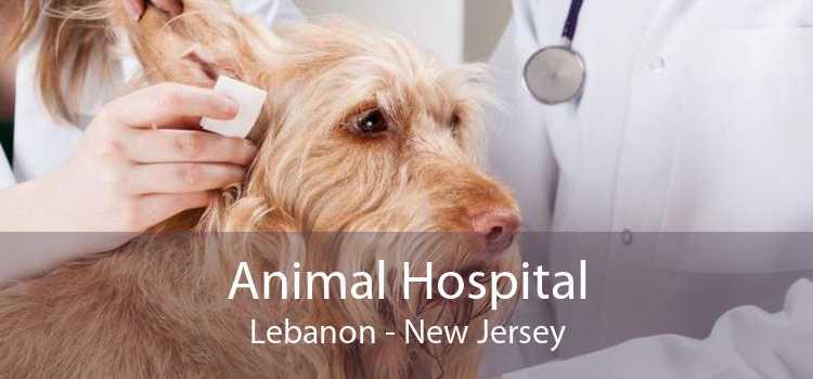 Animal Hospital Lebanon - New Jersey