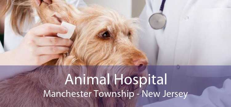 Animal Hospital Manchester Township - New Jersey