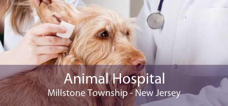 Animal Hospital Millstone Township - New Jersey
