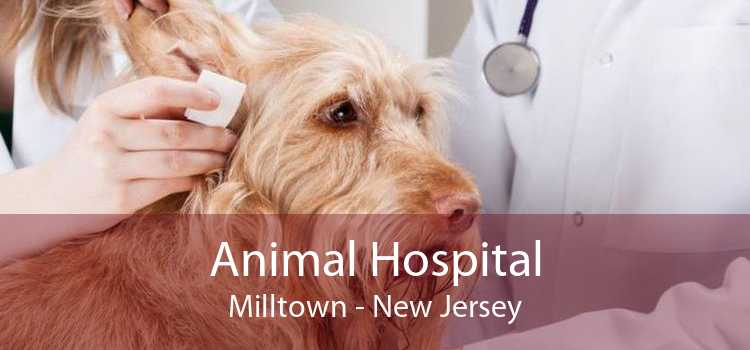 Animal Hospital Milltown - New Jersey