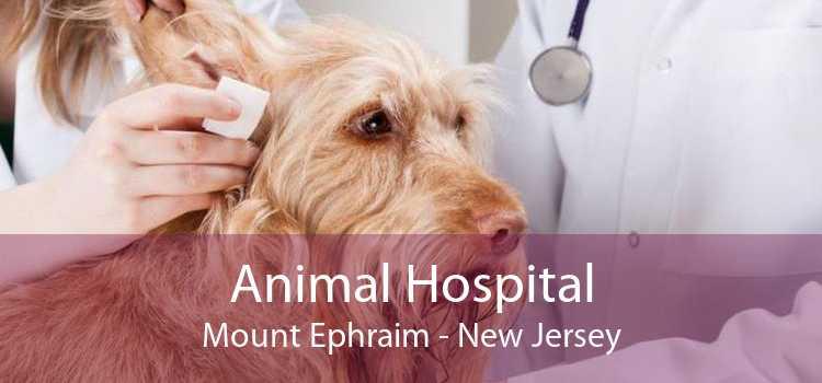 Animal Hospital Mount Ephraim - New Jersey