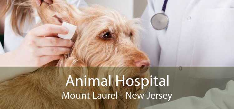 Animal Hospital Mount Laurel - New Jersey
