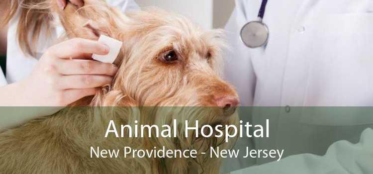 Animal Hospital New Providence - New Jersey