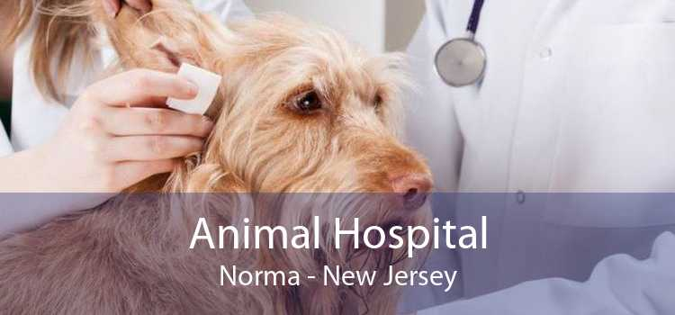 Animal Hospital Norma - New Jersey