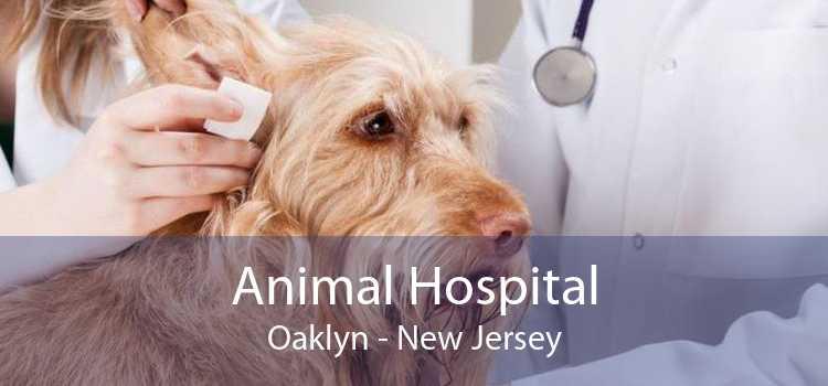 Animal Hospital Oaklyn - New Jersey