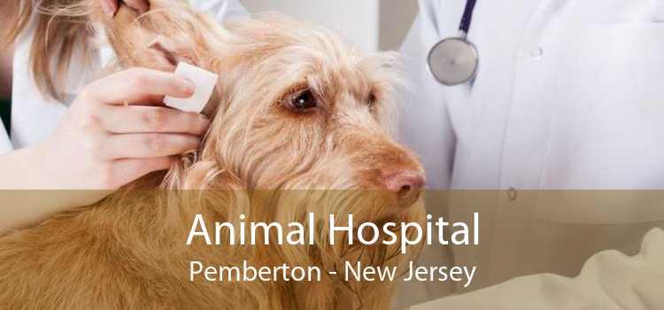 Animal Hospital Pemberton - New Jersey