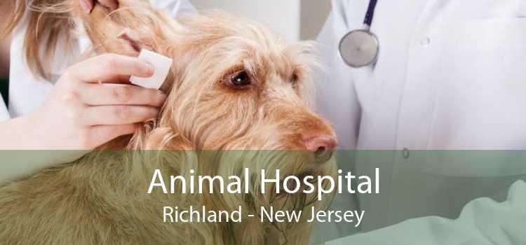 Animal Hospital Richland - New Jersey