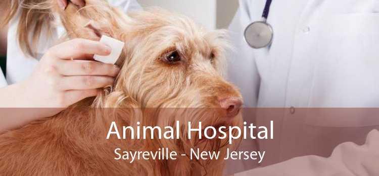 Animal Hospital Sayreville - New Jersey