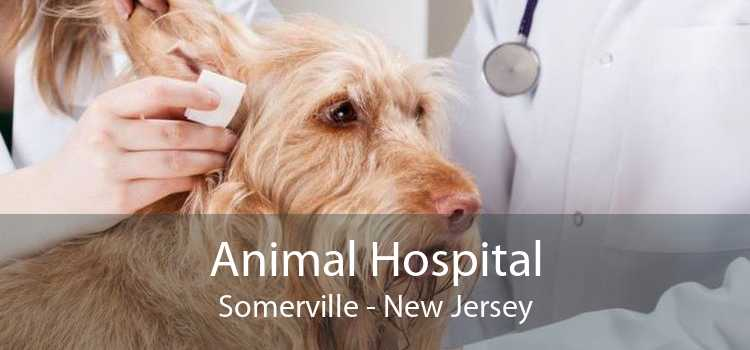 Animal Hospital Somerville - New Jersey