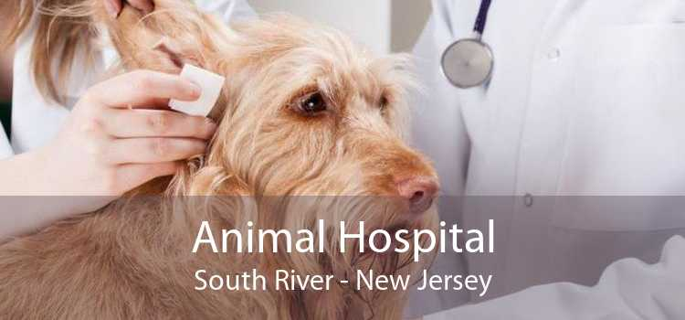 Animal Hospital South River - New Jersey