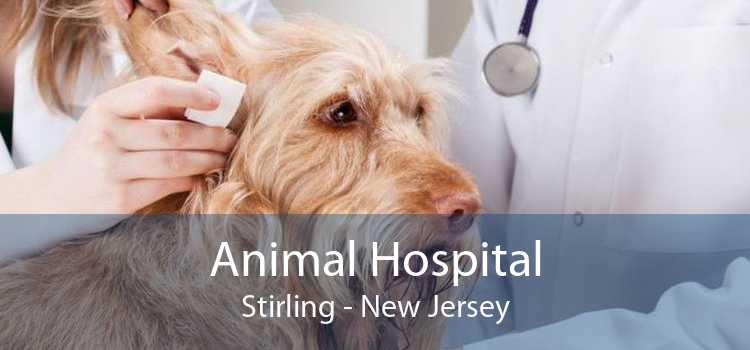 Animal Hospital Stirling - New Jersey