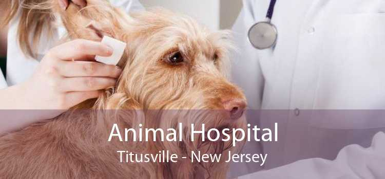 Animal Hospital Titusville - New Jersey