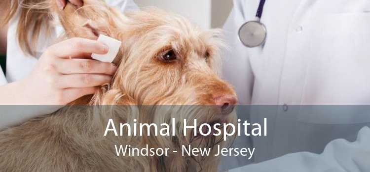 Animal Hospital Windsor - New Jersey