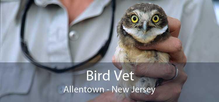 Bird Vet Allentown - New Jersey