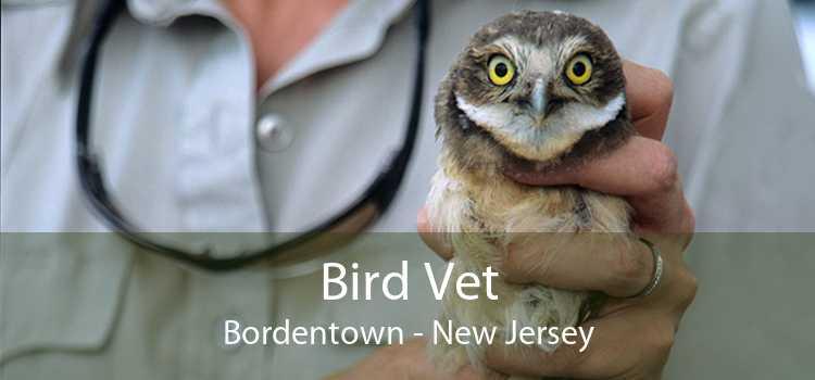 Bird Vet Bordentown - New Jersey