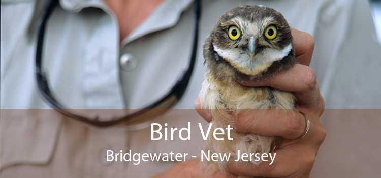 Bird Vet Bridgewater - New Jersey