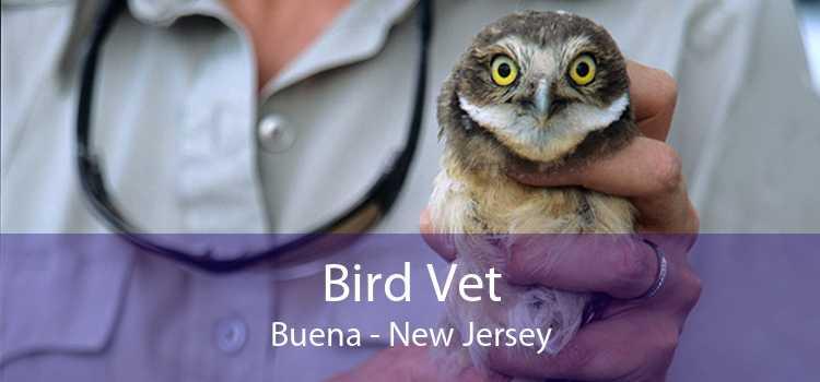 Bird Vet Buena - New Jersey