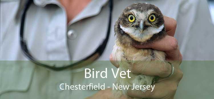 Bird Vet Chesterfield - New Jersey