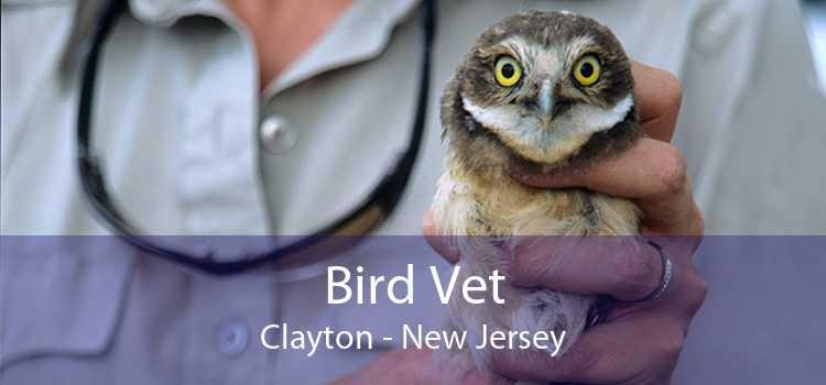 Bird Vet Clayton - New Jersey