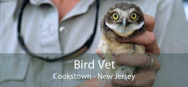 Bird Vet Cookstown - New Jersey