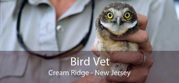 Bird Vet Cream Ridge - New Jersey