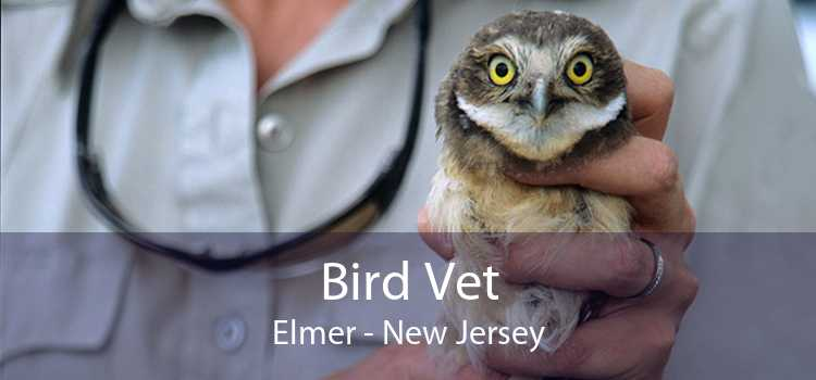 Bird Vet Elmer - New Jersey