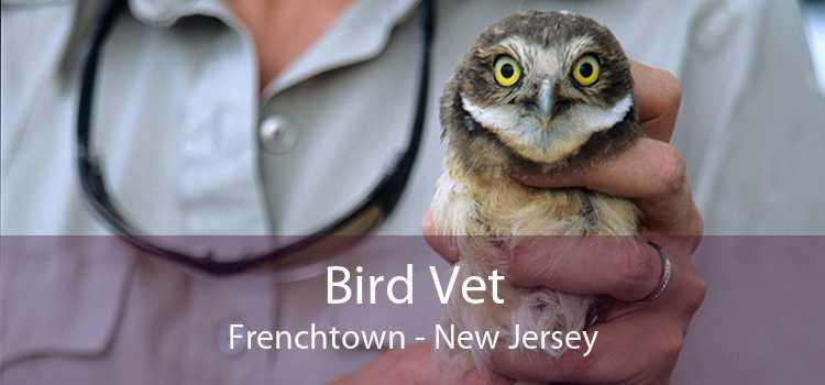 Bird Vet Frenchtown - New Jersey
