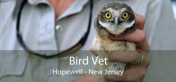 Bird Vet Hopewell - New Jersey