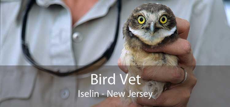 Bird Vet Iselin - New Jersey