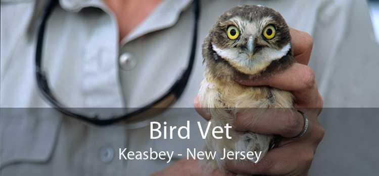 Bird Vet Keasbey - New Jersey