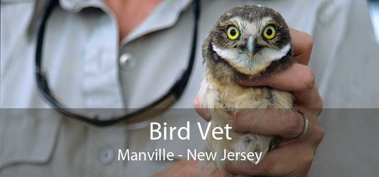 Bird Vet Manville - New Jersey