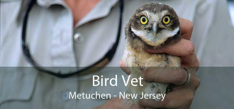 Bird Vet Metuchen - New Jersey