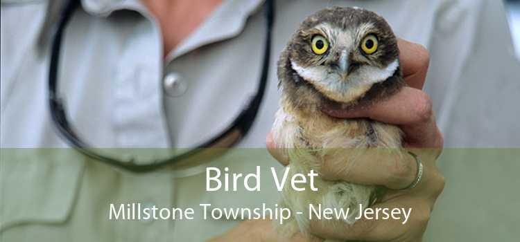 Bird Vet Millstone Township - New Jersey