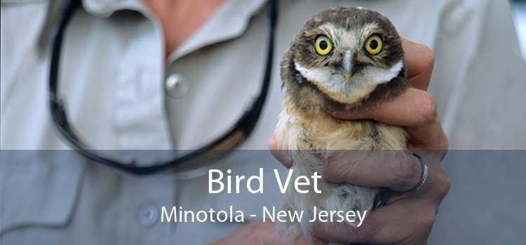 Bird Vet Minotola - New Jersey