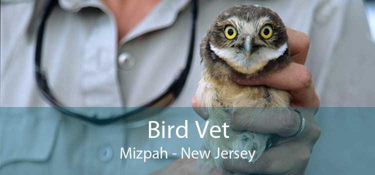Bird Vet Mizpah - New Jersey