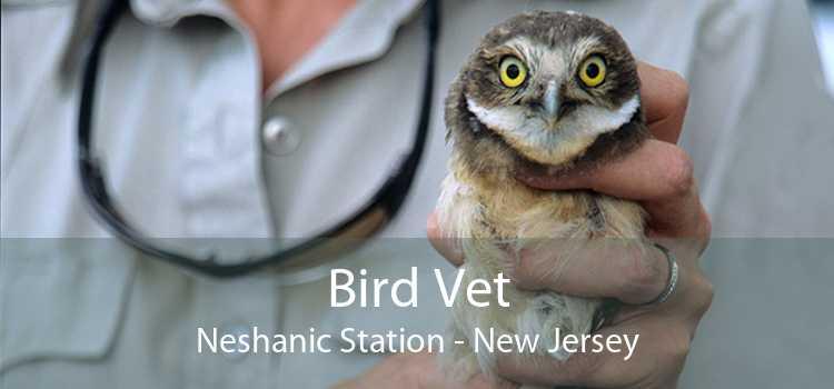 Bird Vet Neshanic Station - New Jersey