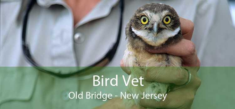 Bird Vet Old Bridge - New Jersey