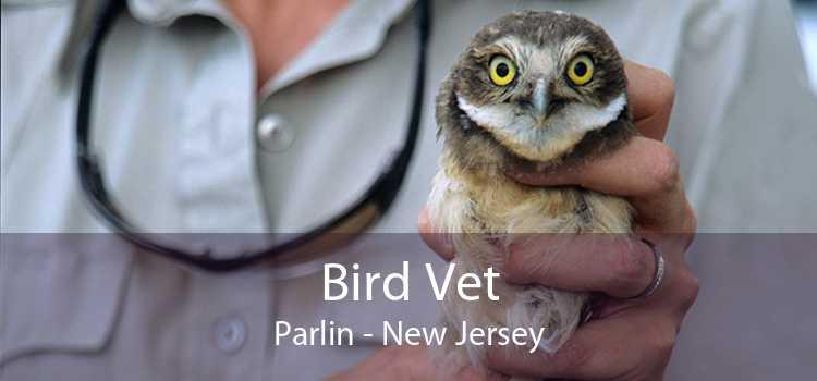 Bird Vet Parlin - New Jersey