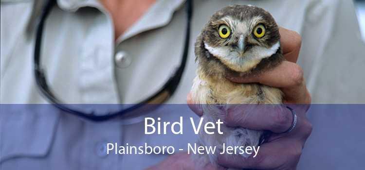 Bird Vet Plainsboro - New Jersey
