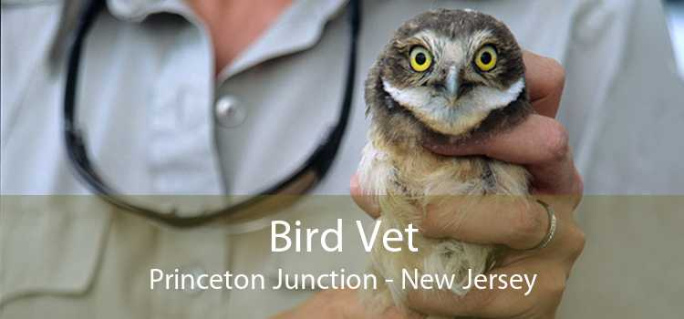 Bird Vet Princeton Junction - New Jersey